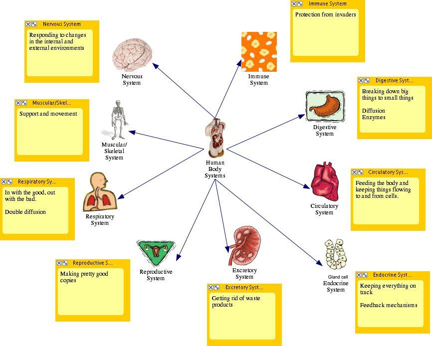 diagram of body systems | Diabetes Inc.